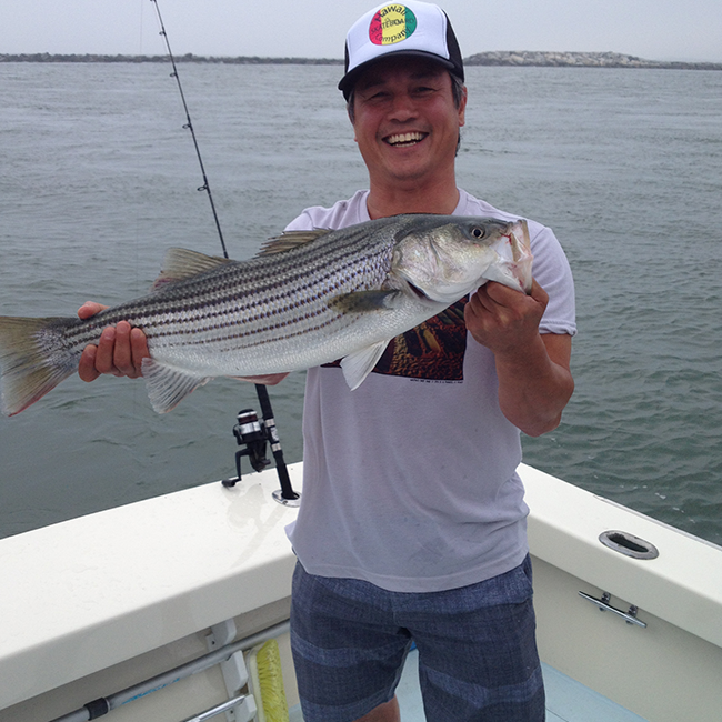 Ocean city maryland striper fishing get sum charters for Maryland state fish